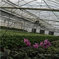 花卉温室大棚搭建