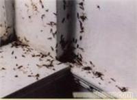 杀虫公司电话-杀灭白蚁-杀灭老鼠-白蚁防治中心-白蚁防治所?