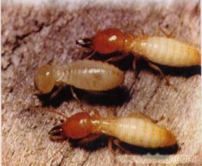 灭白蚁方法,白蚁防治,上海白蚁防治公司