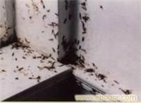 长宁区杀虫公司?