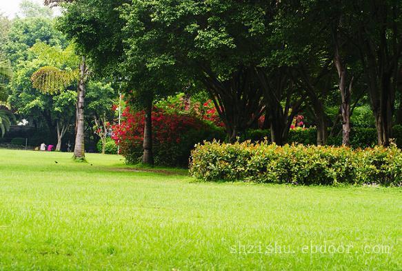 上海花园养护