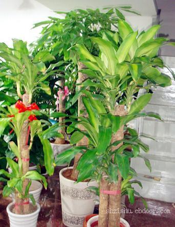 青浦办公室植物租赁,青浦植物租摆公司
