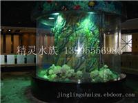 鱼缸景观设计