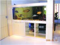 家庭鱼缸设计