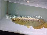武汉玻璃鱼缸厂家