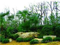 静安区私家别墅花园绿化养护