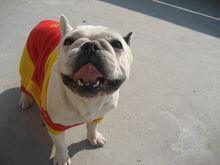 上海宠物寄养-上海宠物寄养公司-上海宠物寄养哪家好