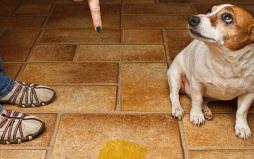 上海宠物训练-上海宠物训练公司-上海宠物训练学校