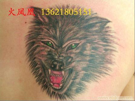 给火凤凰-上海专业纹身室的背部狼纹身图留言