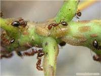 专杀白蚁?