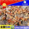 重庆土鸡苗养殖技术