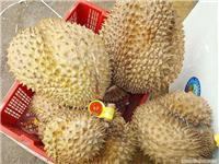 上海批发进口榴莲水果市场