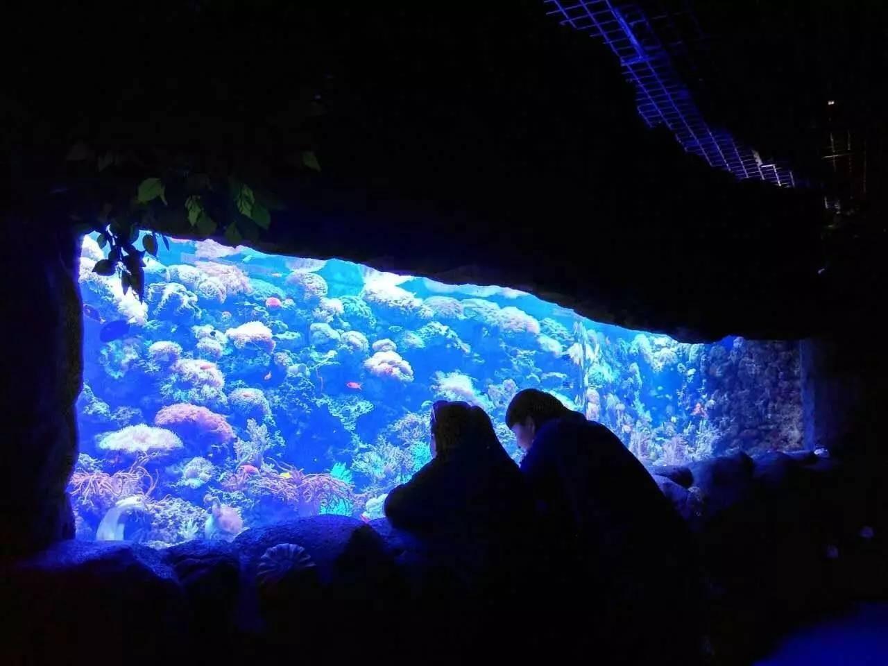 观赏大型亚克力鱼缸邂逅爱情