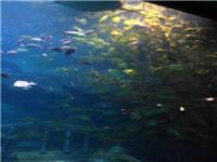 上海哪里可以有海洋馆看-张江绿地广场,亚克力鱼缸厂家