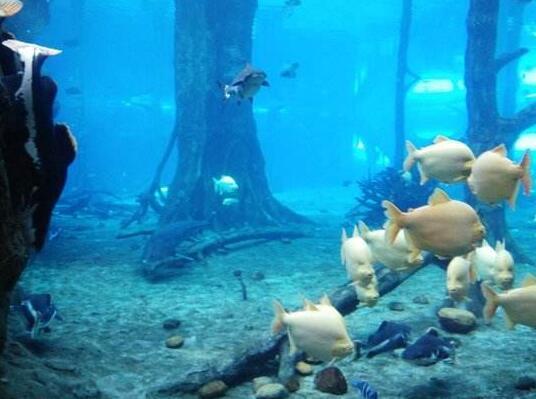 观赏亚克力鱼缸定做-鱼缸里不一样的海底世界