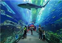 2019大型海洋馆施工单位-亚克力鱼缸厂家