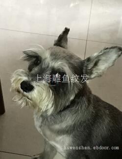 上海雕鱼纹发工作室
