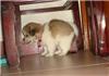 上海宠物训练中心-宠物交流中心电话