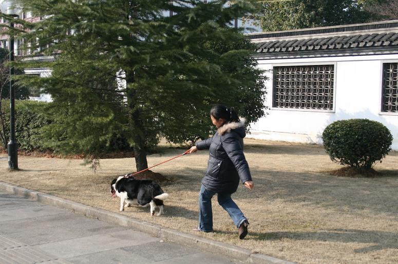 上海专业训犬电话-专业训犬公司