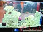 亚克力生态鱼缸/鱼缸