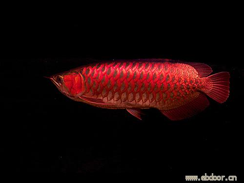 分享鱼的乐趣 延安龙鱼论坛 延安龙鱼第10张