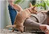 宠物训练-宠物培训