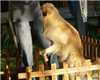 宠物到哪寄养-上海宠物寄养