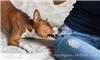 上海宠物培训-宠物培训报价-上海宠物培训价格