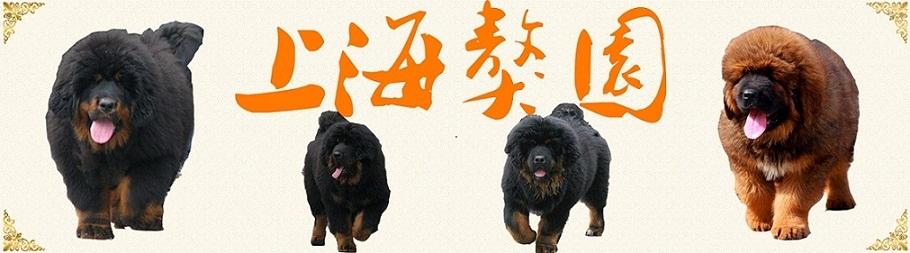 上海獒园有限公司