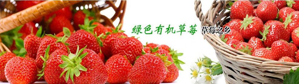 上海青浦赵屯规划5年