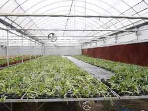农业种植温室
