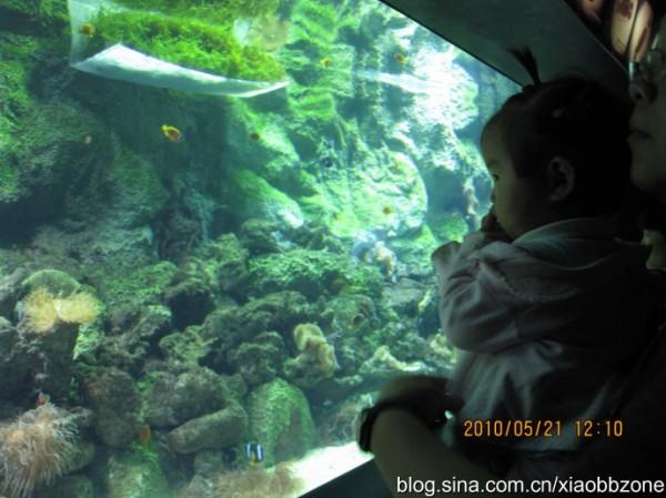大型假山鱼缸