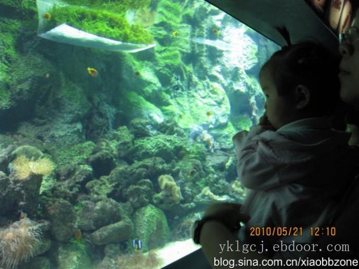 上海海洋馆施工工程-订制亚克力鱼缸