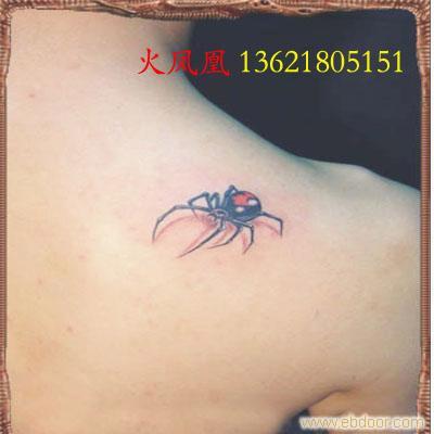 蜘蛛纹身图片图片